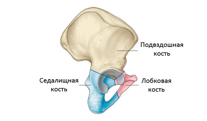 перелом лонной кости таза лечение