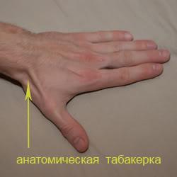 анатомическая табакерка