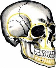 перелом основания черепа причины