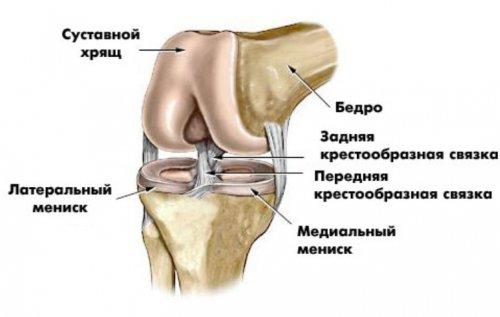 Растяжение связок коленного сустава: симптомы, лечение, сроки 70