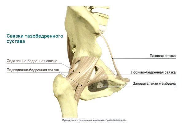 Растяжение паховых связок: симптомы, лечение