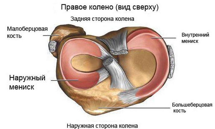 анатомия мениска